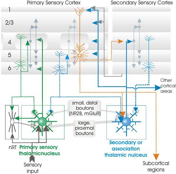 深度神经网络(DNN)是否模拟了人类大脑皮层结构?-集智俱乐部