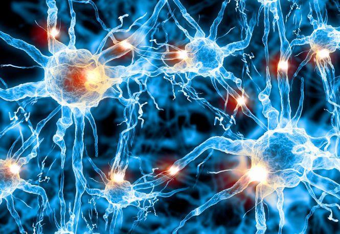 用神经学习模型计算海量实际网络中的节点中心性度量 | 论文速递1篇-集智俱乐部
