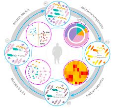 """宿主与微生物一起构成的""""超级生物体""""是如何演化的?-集智俱乐部"""