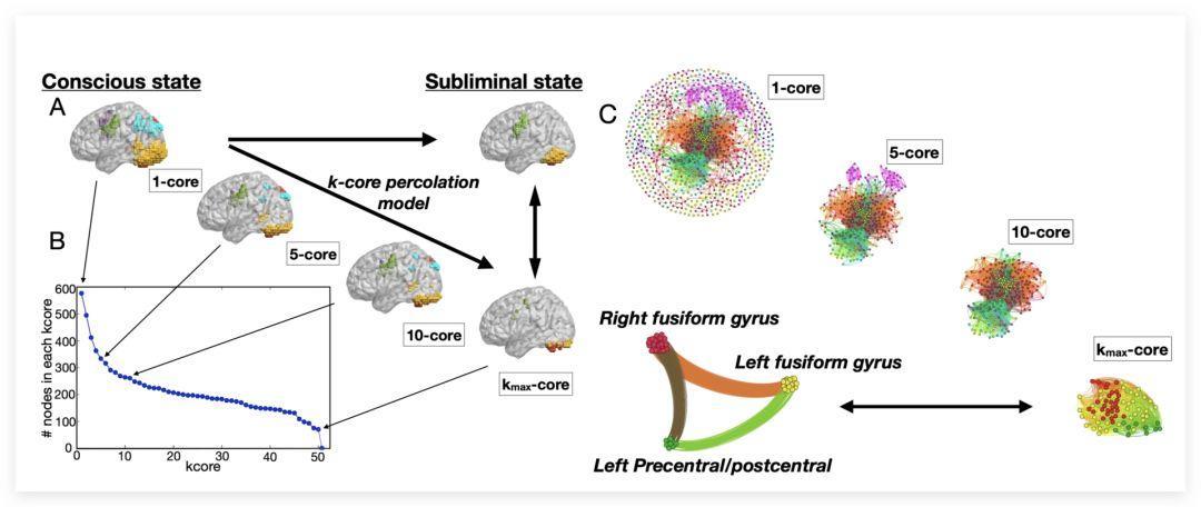 大脑网络如何实现从意识到潜意识的状态转变?——k核分解给你答案-集智俱乐部