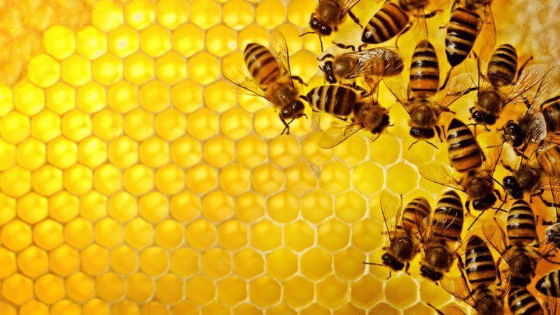 如何表征人工蜂群算法中社会交互 | 网络科学论文速递17篇-集智俱乐部
