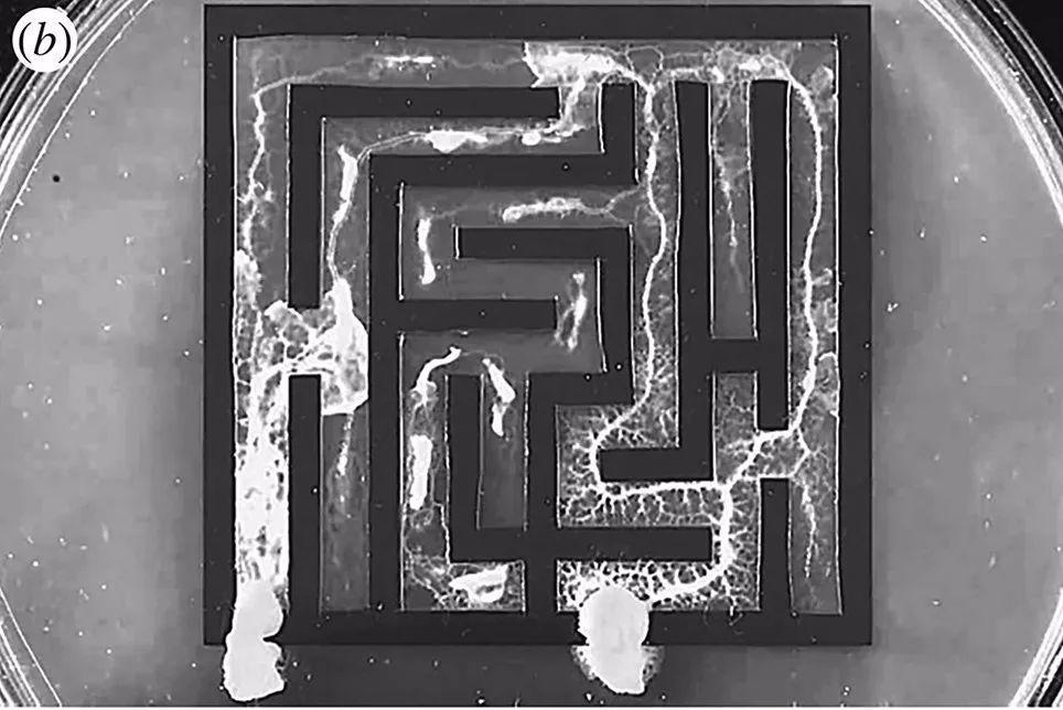 圣塔菲最新群体智能文集——液态大脑与固态大脑-集智俱乐部