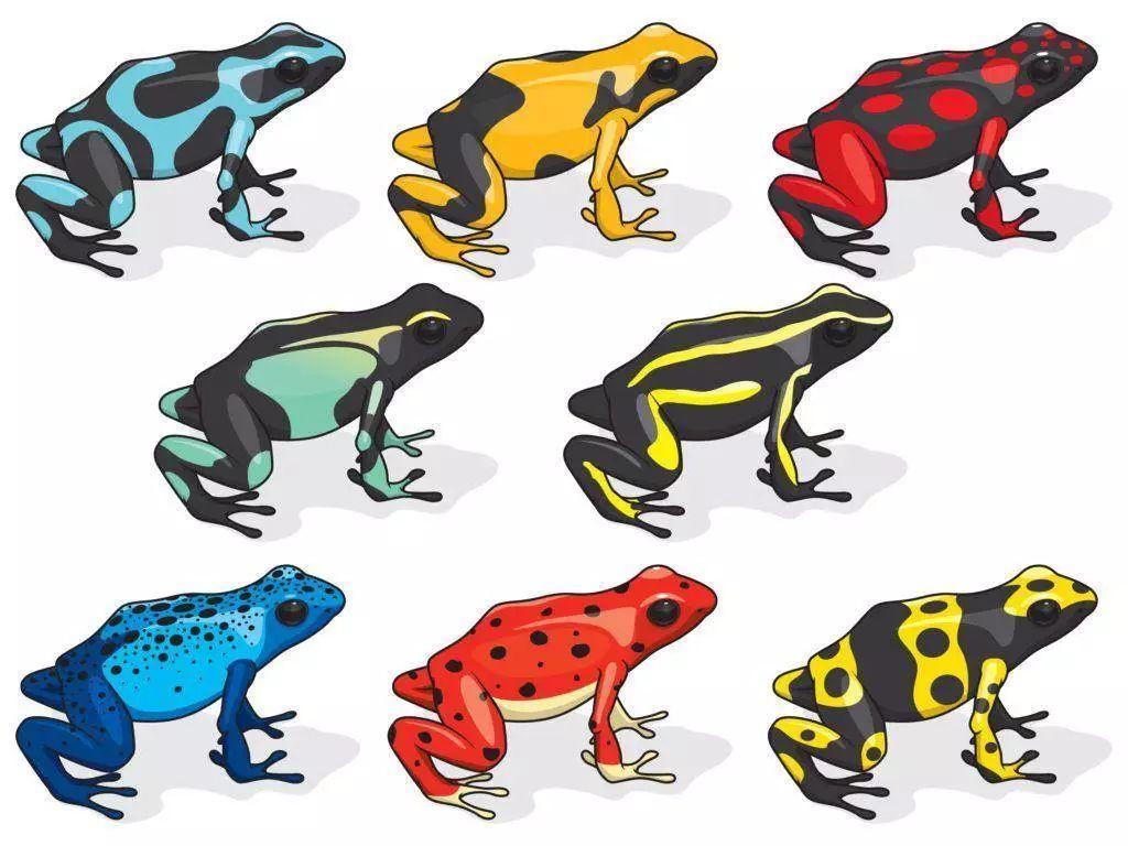 深度学习首次验证进化数学模型:趋同演化增加生物多样性-集智俱乐部
