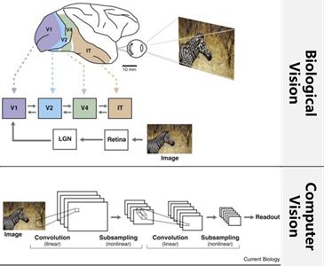 神经科学走出实验室:连接人工智能与现实生活认知-集智俱乐部