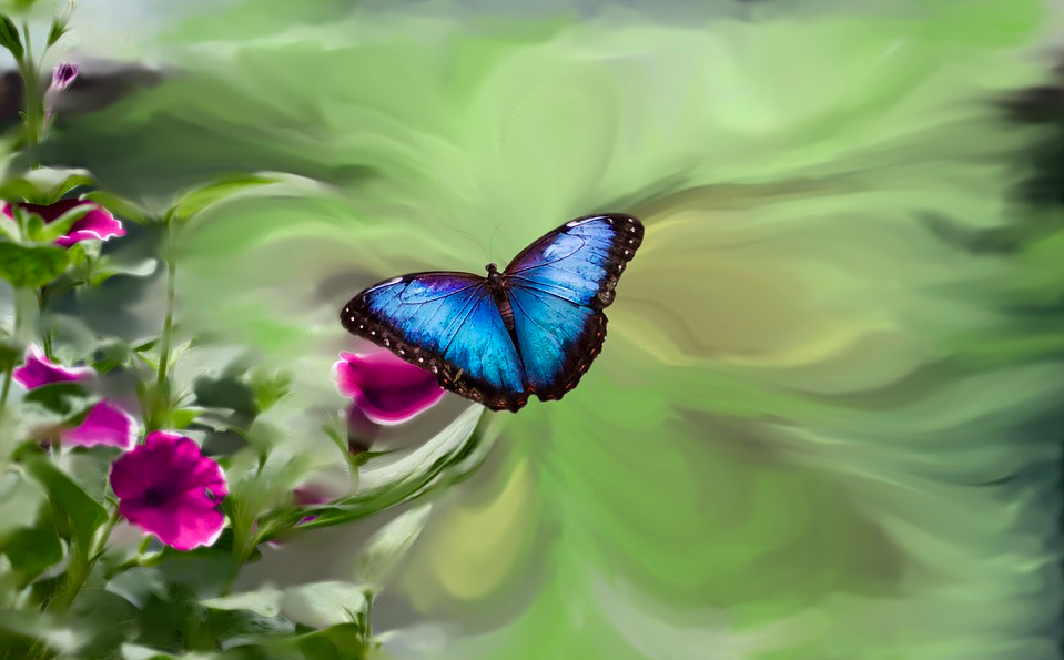 蝴蝶效应和混沌故事 | 陈关荣